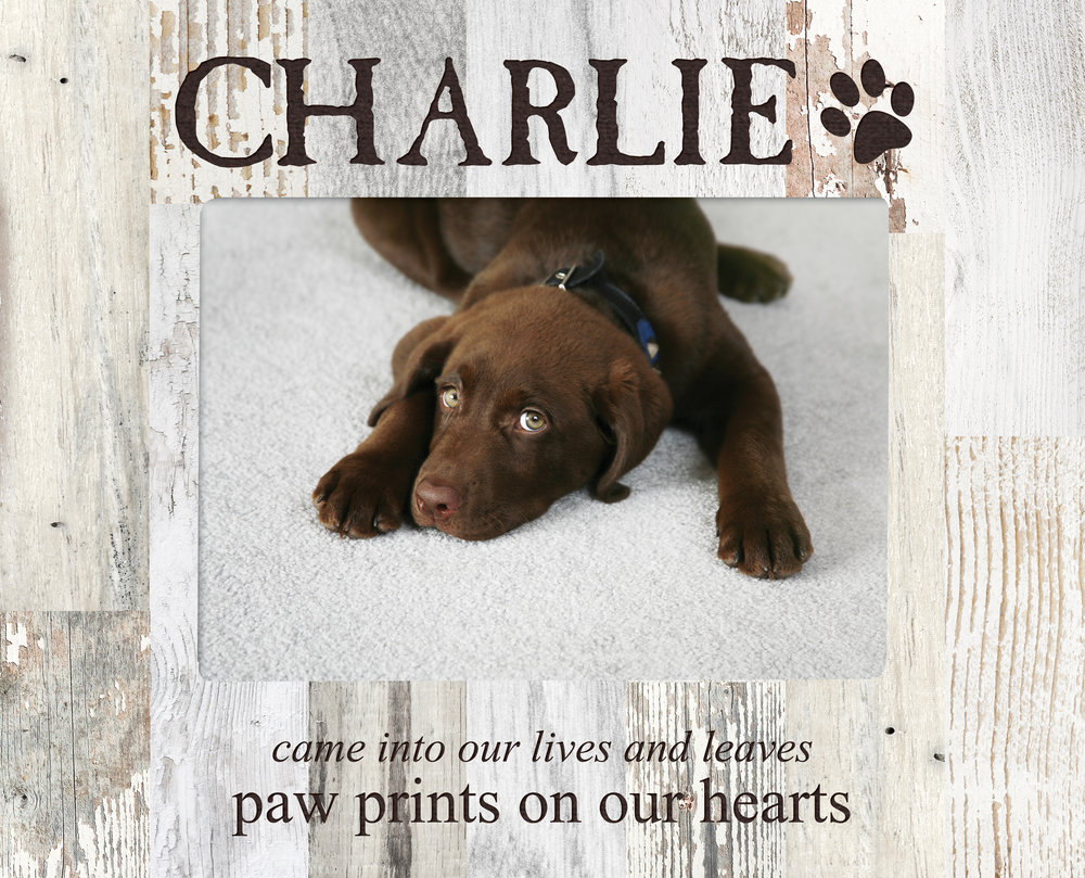 Personalizing Your Pet Accessories 4