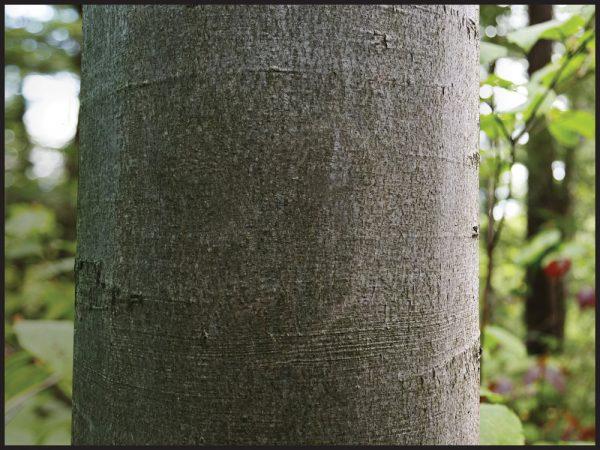 Tree Plaque 5